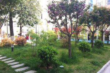 院内中心花园